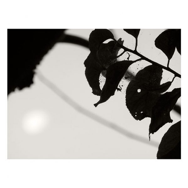 2-ariane-amoureuse-40x50