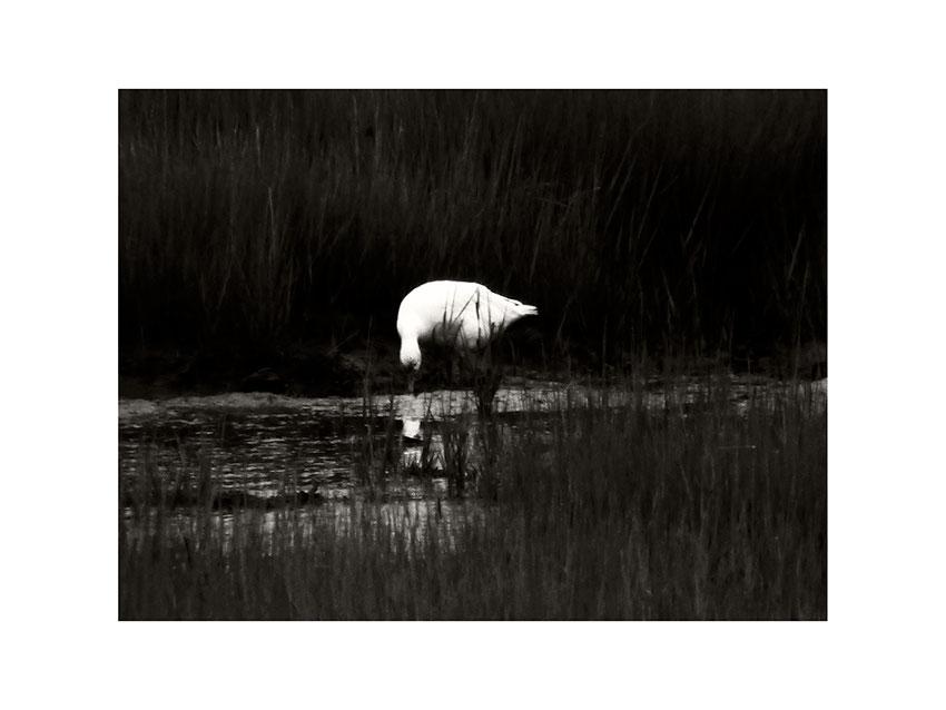 Latone 2013 © catherine peillon