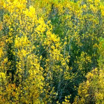 jaune 2010