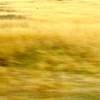 du jaune 14 © Catherine Peillon