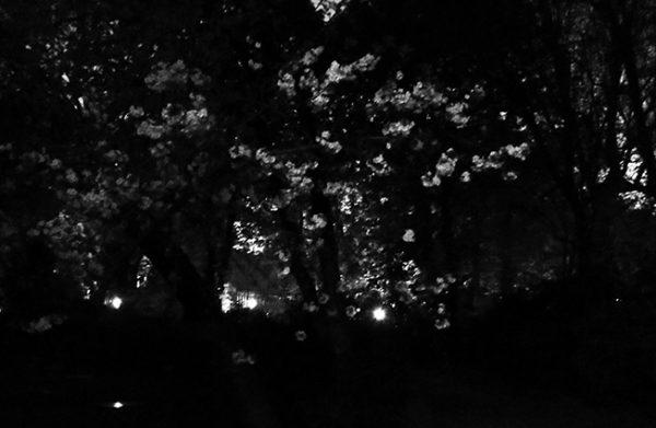 Nuit de l'institut © catherine peillon