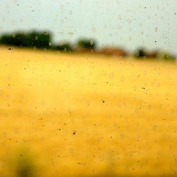 jaune 4 © Catherine Peillon